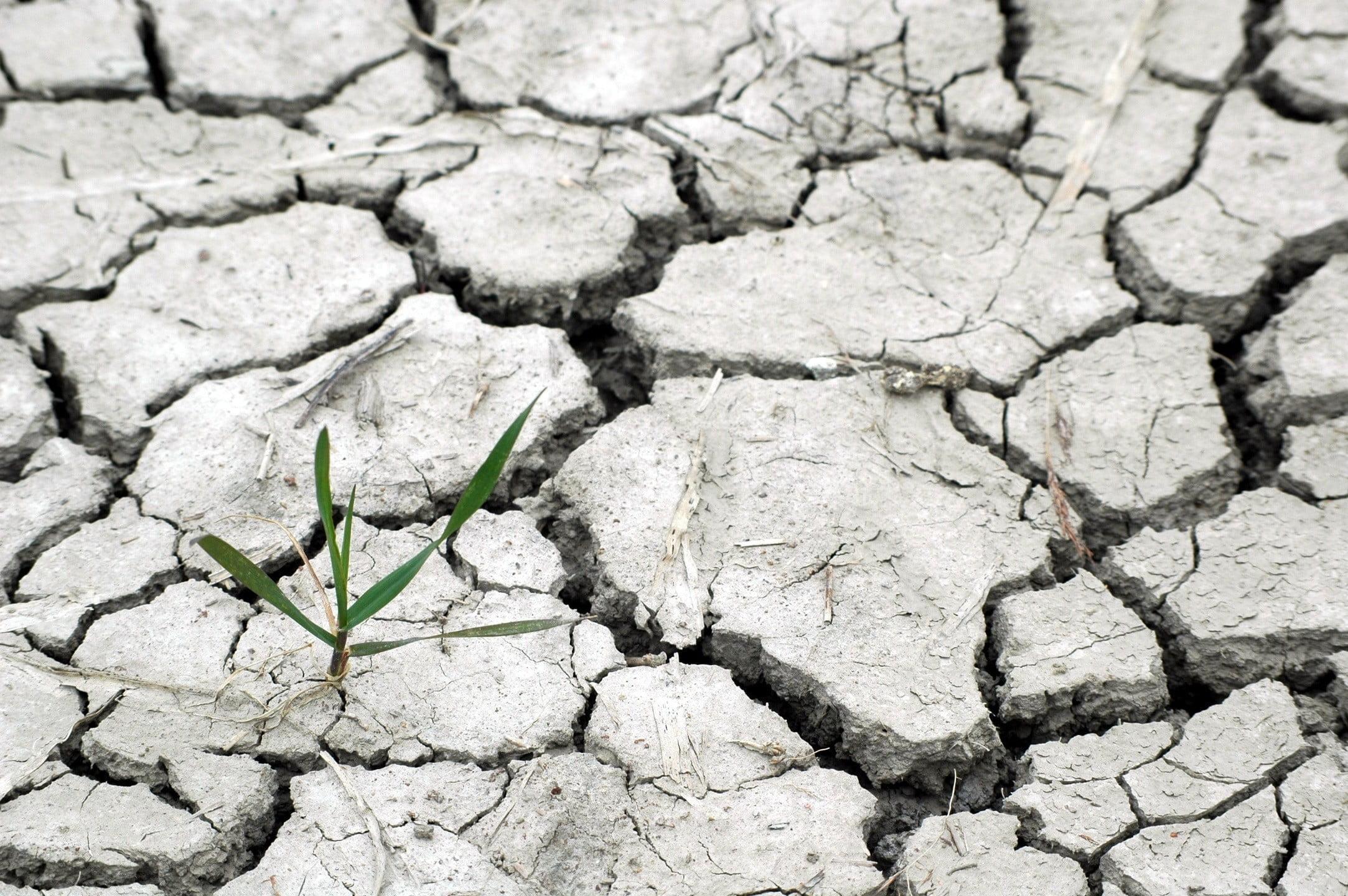 susza, środowisko, natura