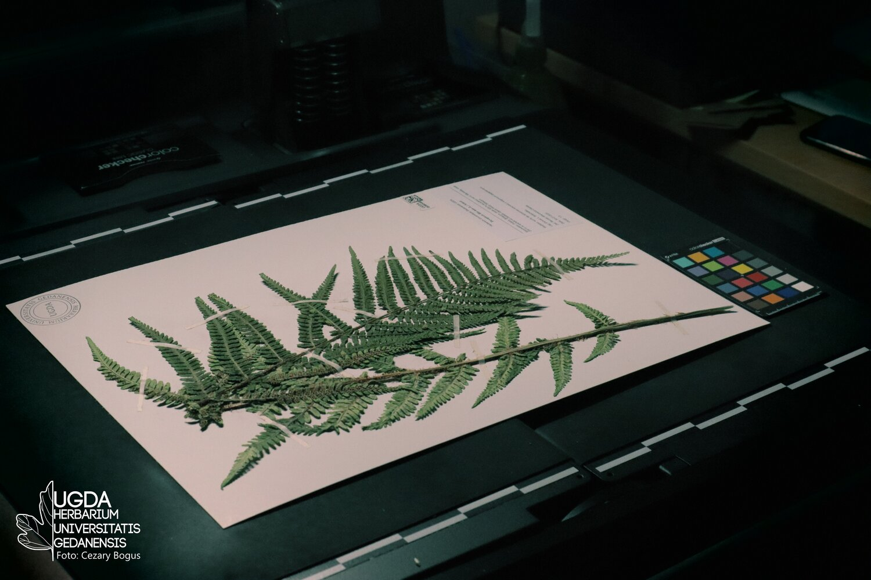 Herbarium, HPE
